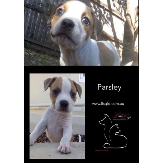 Photo of Parsley