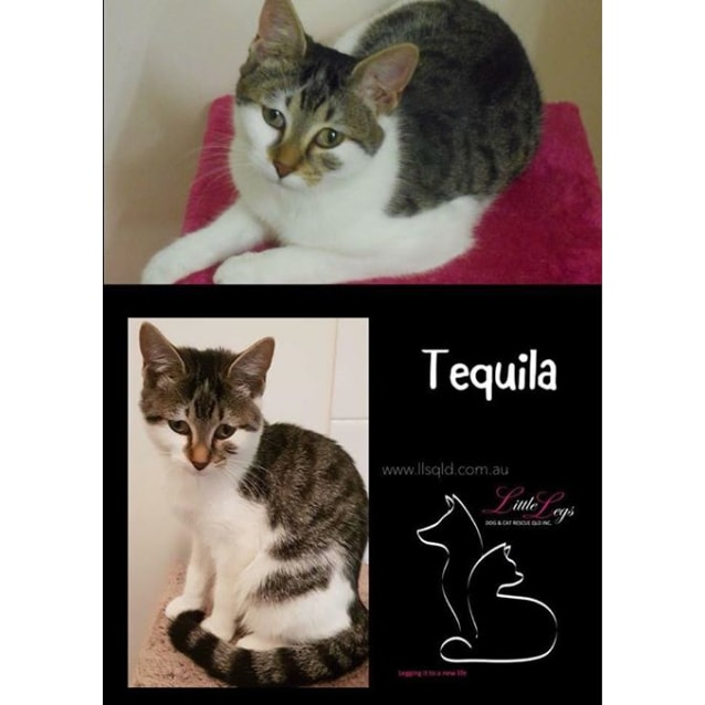 Photo of Tequila