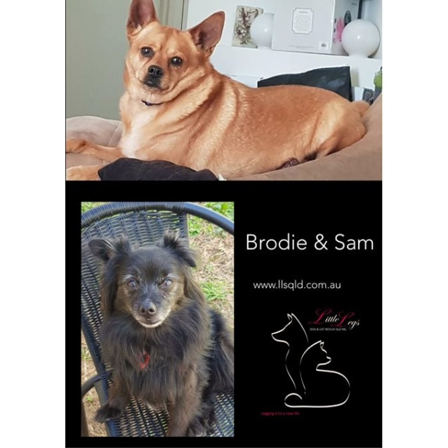 Photo of Brodie And Sam