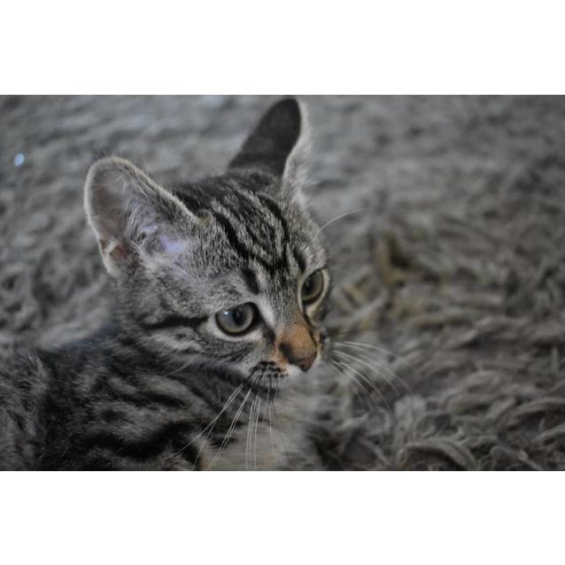 Photo of Sneezy