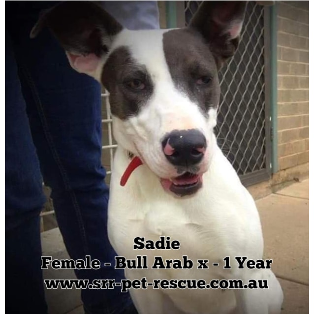 Photo of Sadie