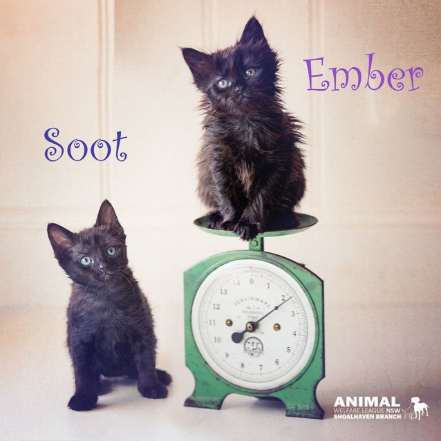 Photo of Ember And Soot