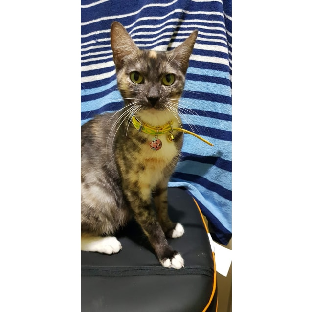 Photo of Sweetpea  (Duplicate Entry)
