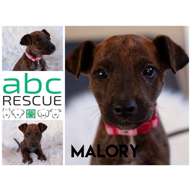 Photo of Malory