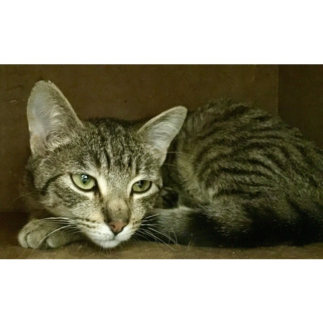 Photo of Roxanne **2nd Chance Cat Rescue**