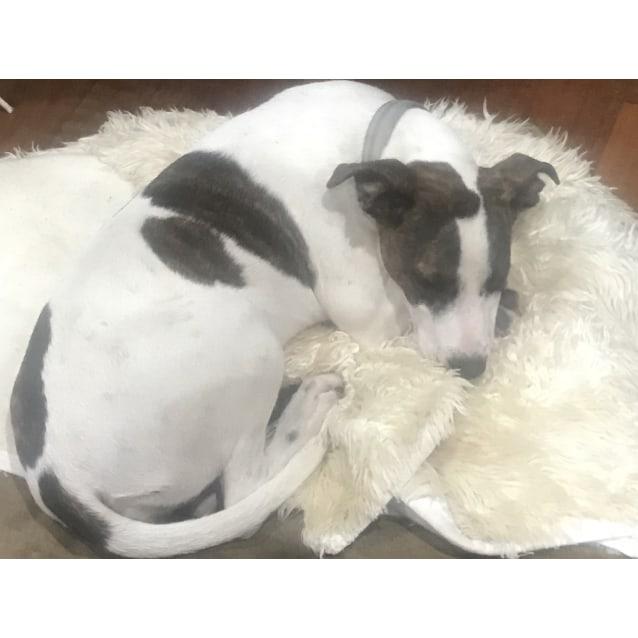 Photo of Kira (On Adoption Trial)