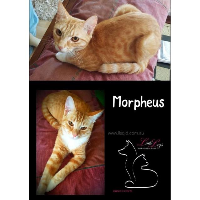 Photo of Morpheus