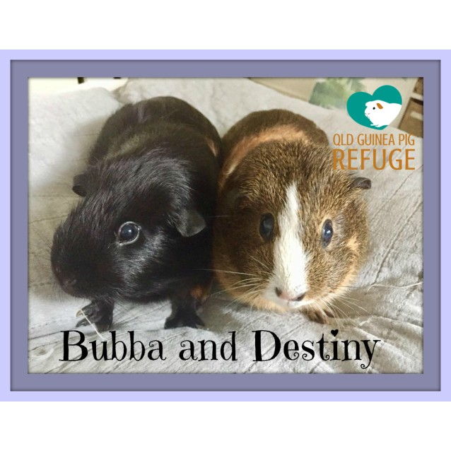 Photo of Bubba And Destiny