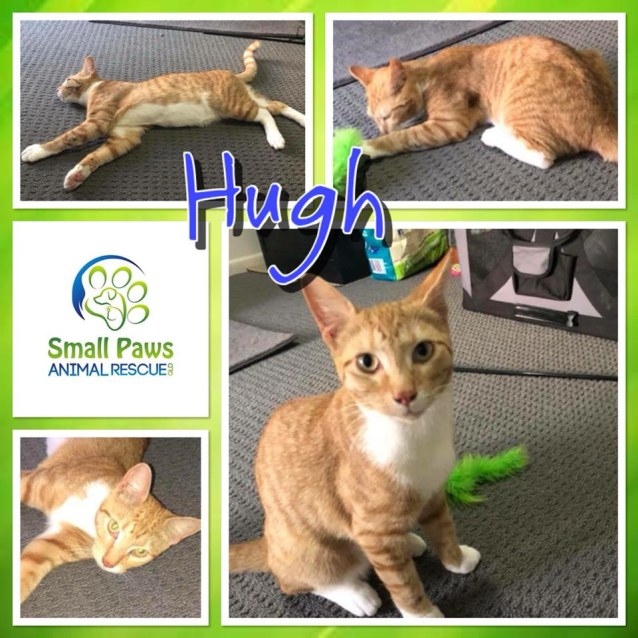 Photo of Hugh