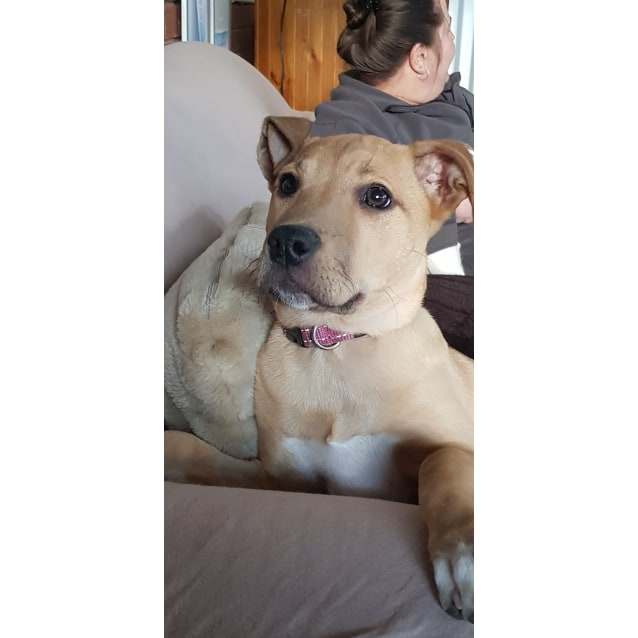 Photo of Penny