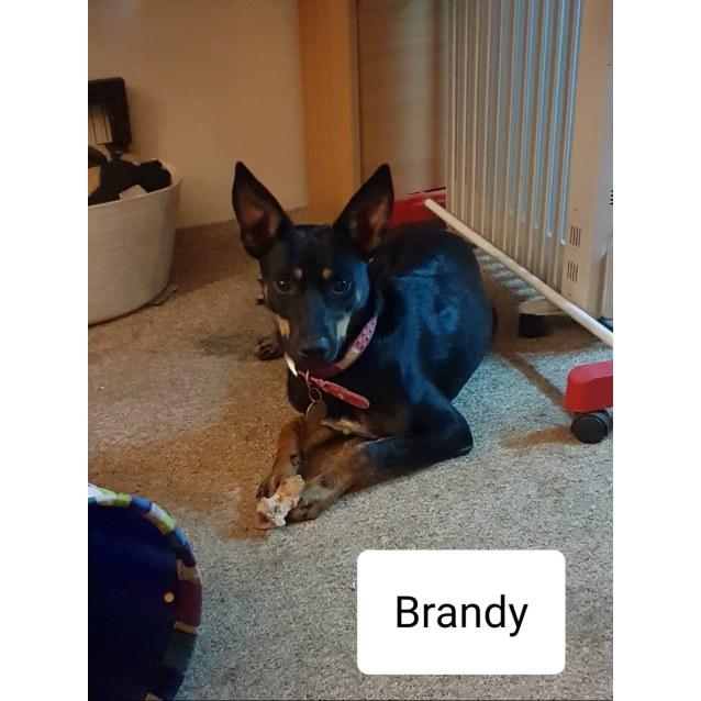 Photo of Brandy