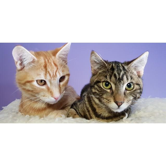 Photo of Timmy & Tobias