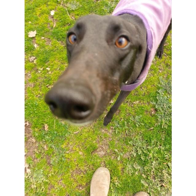 Photo of Miss Peppa