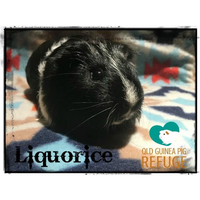 Photo of Liquorice (Desexed Male)