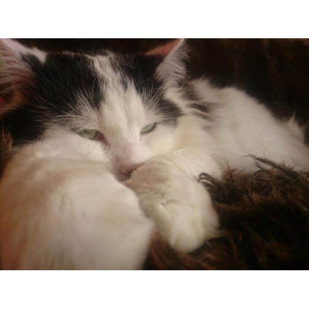 Photo of Lidia & Frank    Meet Me At Cat Lounge/Neko Hq