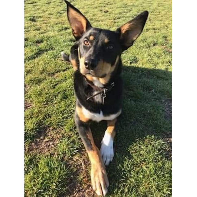 Photo of Mallee *Assisted Rehoming