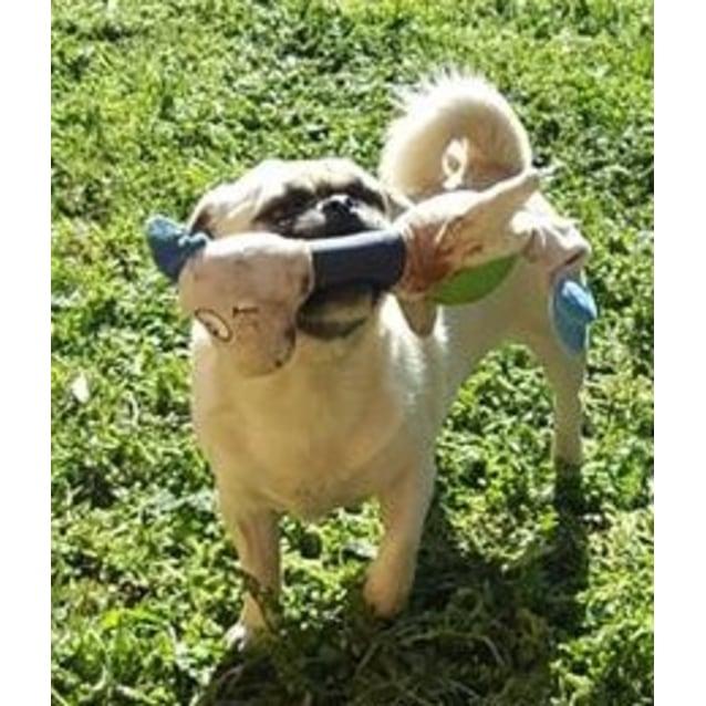 Photo of Doug The Pug