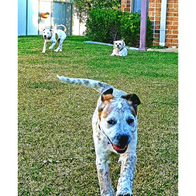 Photo of Matilda ~ Sweet Mastiff X Puppy