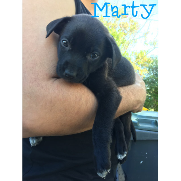 Photo of Marty