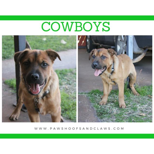 Photo of Cowboys