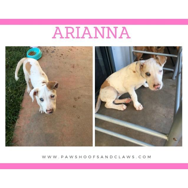 Photo of Arianna