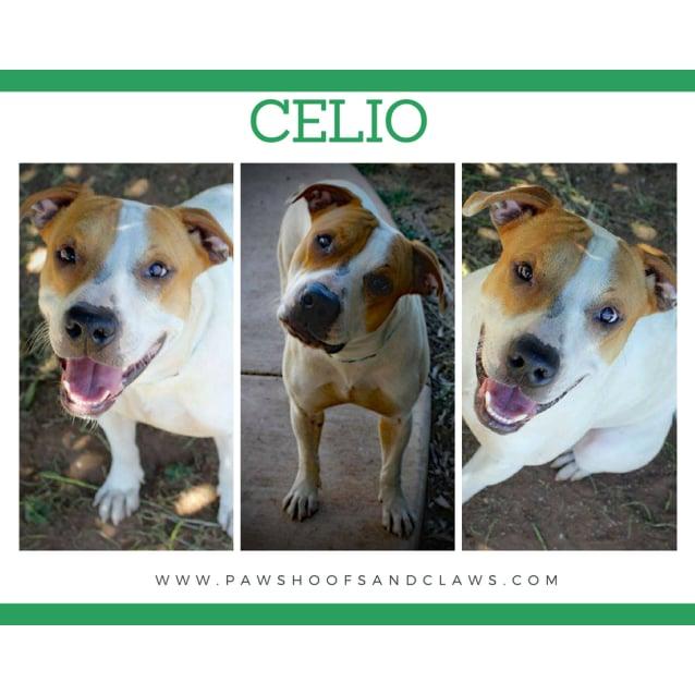 Photo of Celio