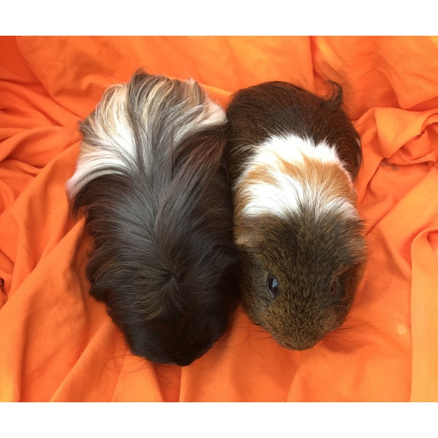 Photo of Leopold & Nash