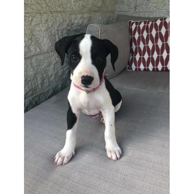 Photo of Florence **Adoption Pending**