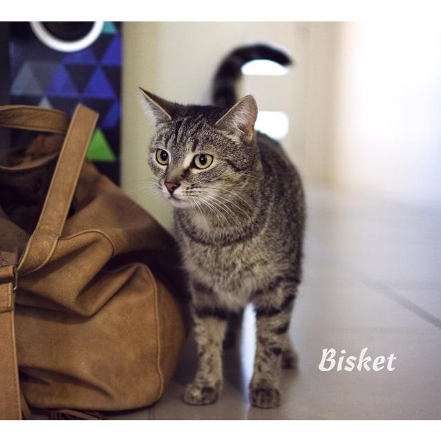 Photo of Bisket   $99 Special