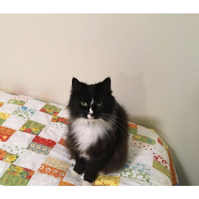 Photo of Ac0856   Kitty Boo