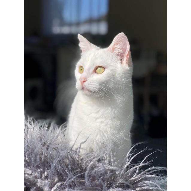 Photo of Yuki (Located In Frankston)