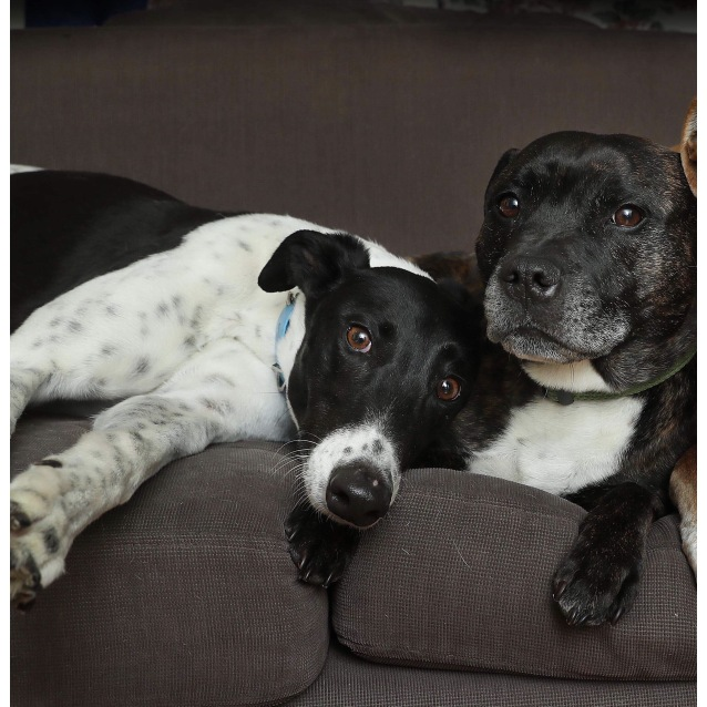 Photo of Ollie And Buddy (Foster Carer Needed)
