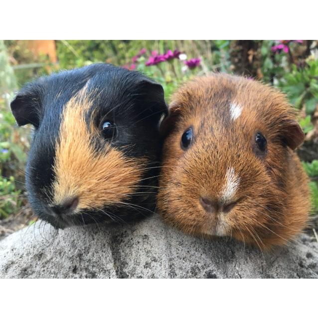 Photo of Trixie & Taffee