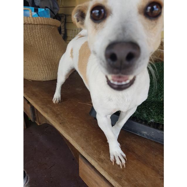 Photo of Milo