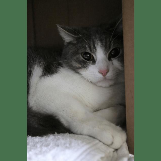 Photo of Bingly
