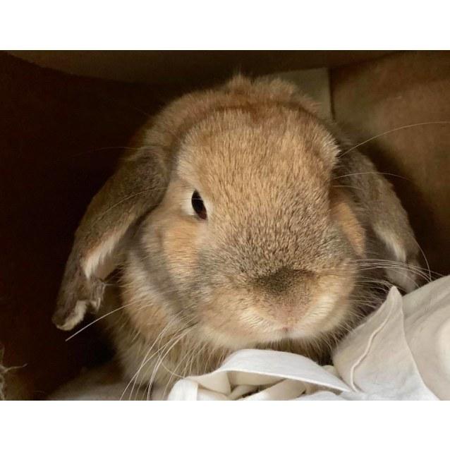 Photo of Bugs Bunny