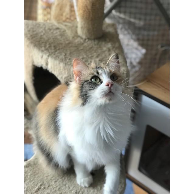 Photo of Meeko