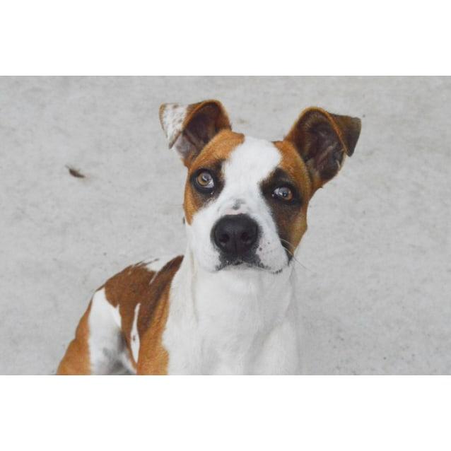 Photo of Harper 30884 Campbelltown Acf