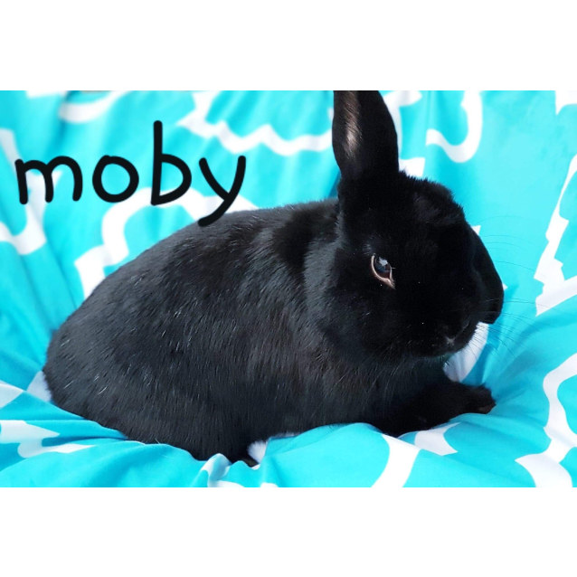 Photo of Moby