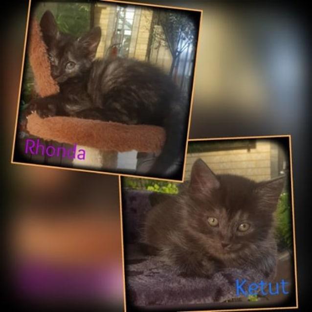 Photo of Rhonda & Ketut