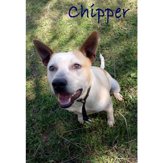 Photo of Chipper