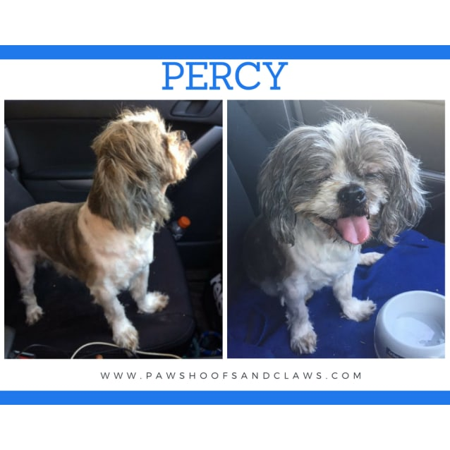 Photo of Percy