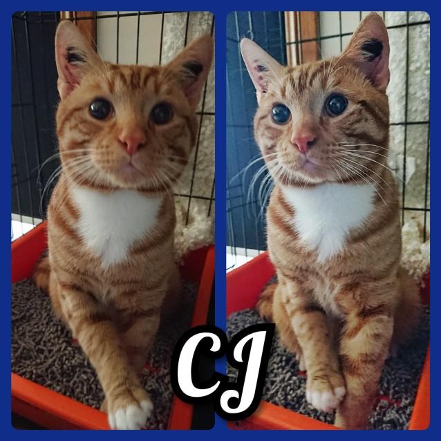 Photo of Cj