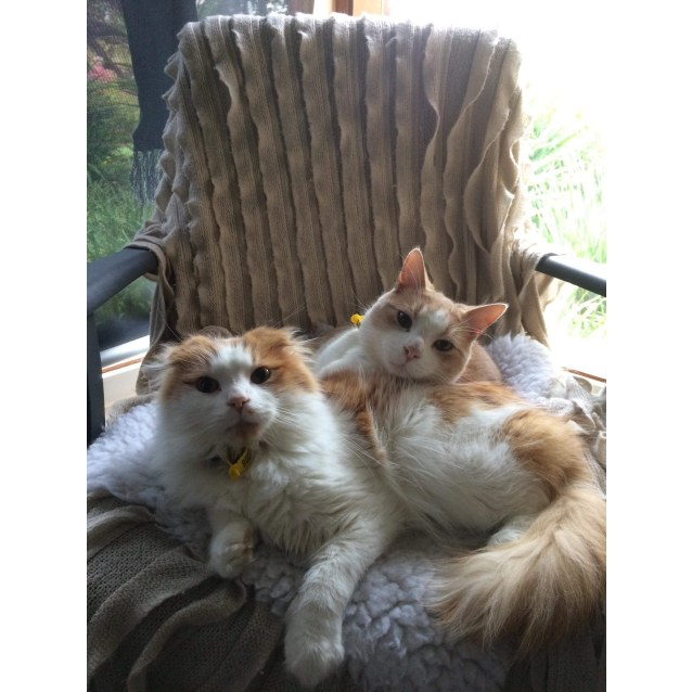 Photo of Sunshine (Sunny) And Coconut