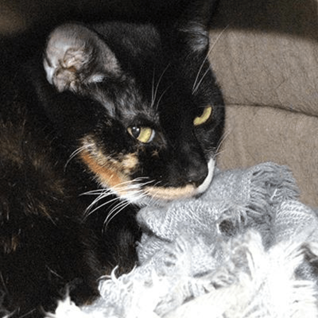 Photo of Patches 901914
