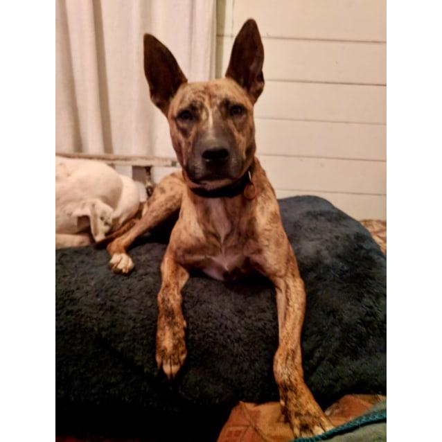 Photo of Marshall (Adoption Pending)