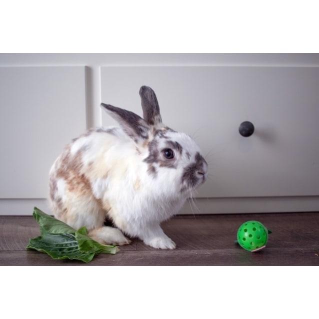 Photo of Marshmallow R054
