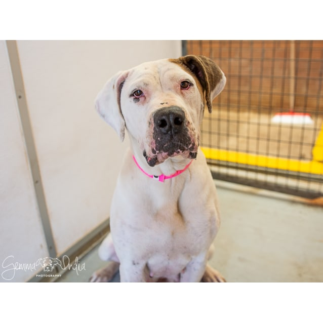 Photo of Lucy (3773)