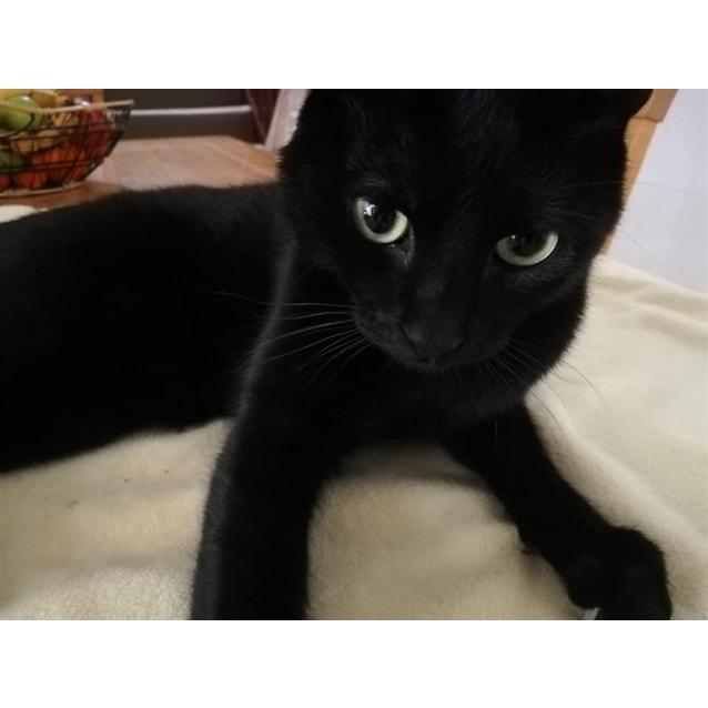 Photo of Kuro