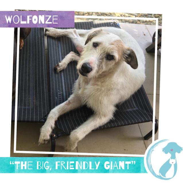 Photo of Wolfonze